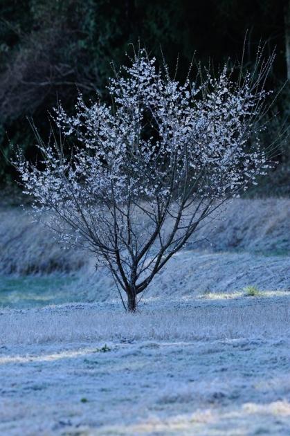 霜160312-1