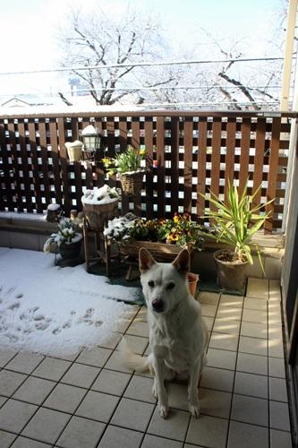 IMG_3273雪