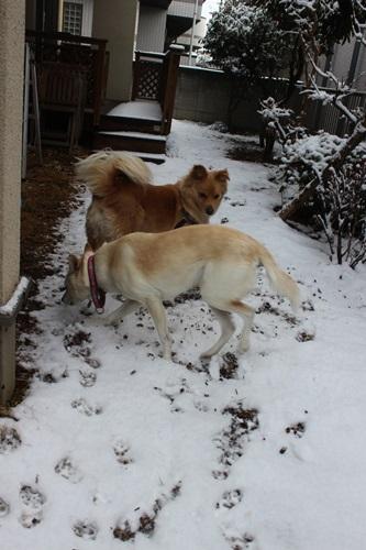 IMG_3281雪