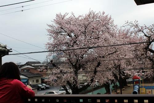 IMG_3754桜