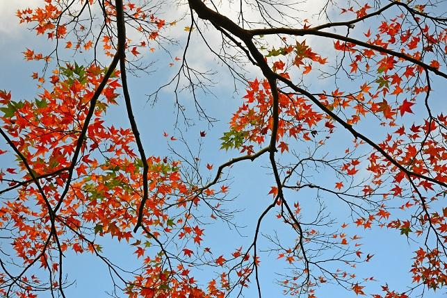 晩秋の風景(2)