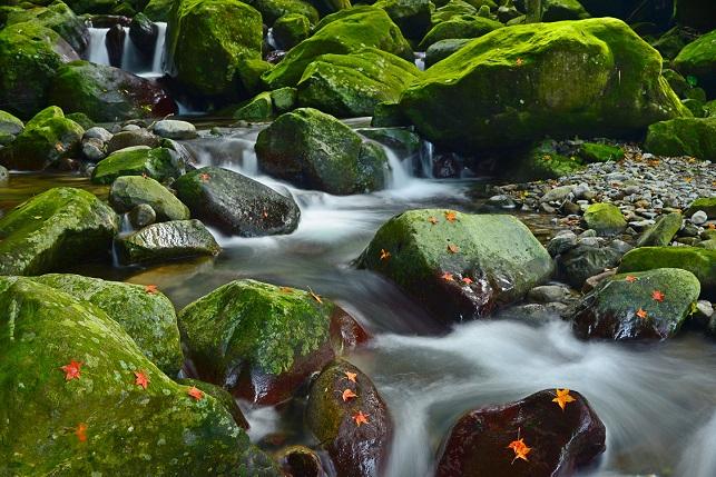渓流の小さな秋
