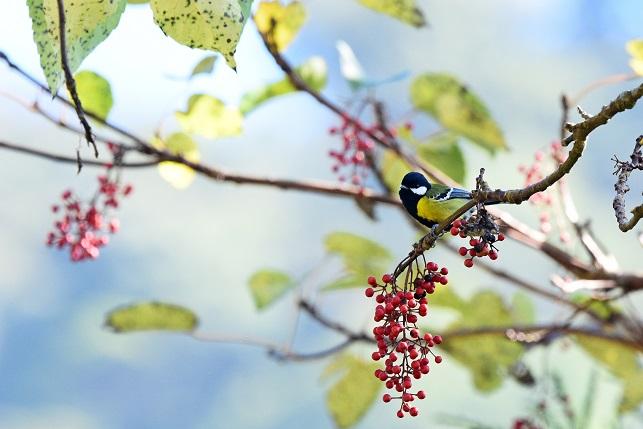 イイギリと野鳥(4)