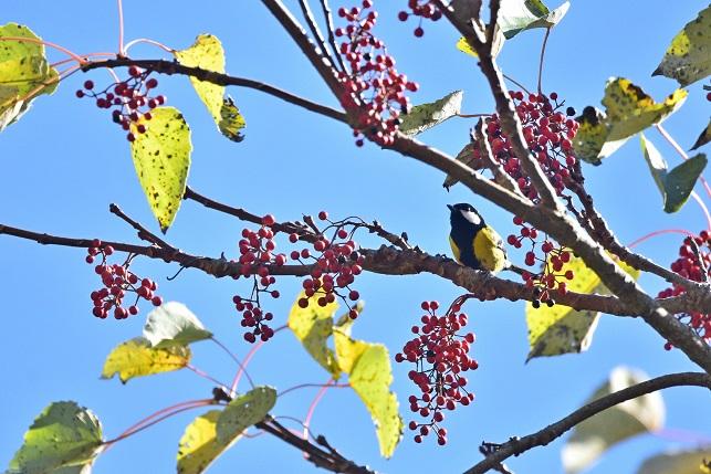 イイギリと野鳥(3)