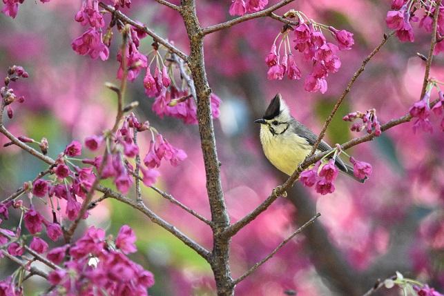 林道の野鳥たち(6)