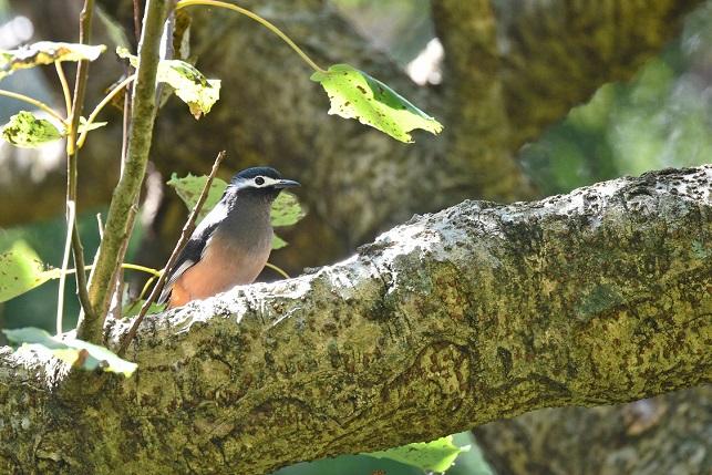 林道の野鳥たち(3)