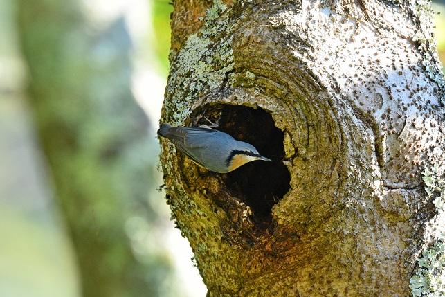 林道の野鳥たち(4)