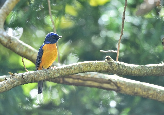 林道の野鳥たち(2)