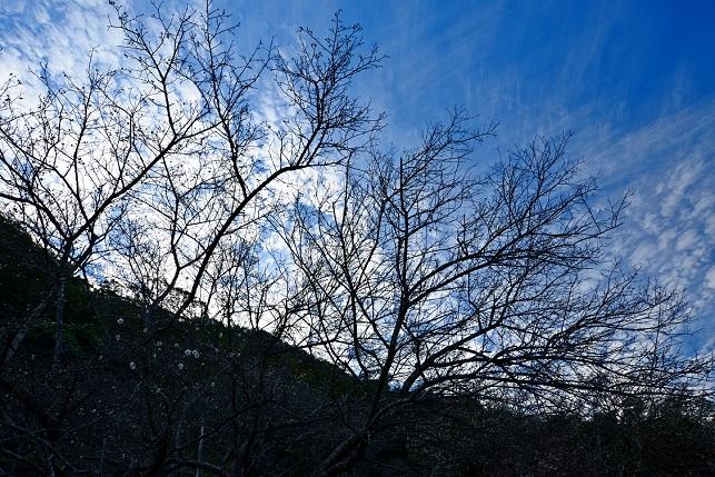 冬空とクモ(4)