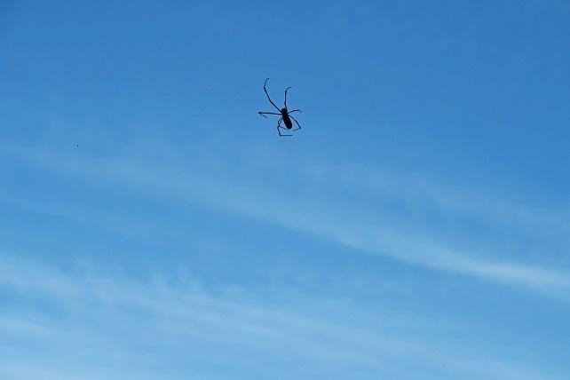冬空とクモ(1)
