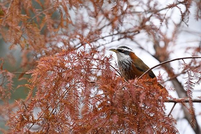 野鳥(8)