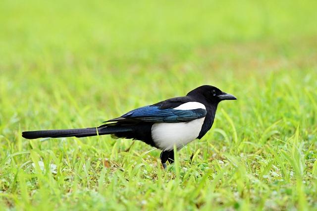 野鳥(7)
