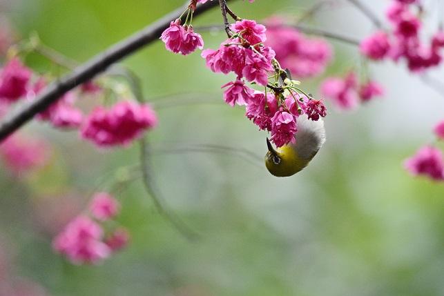 春雨が降る頃(4)