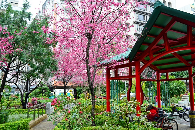 春雨が降る頃(1)