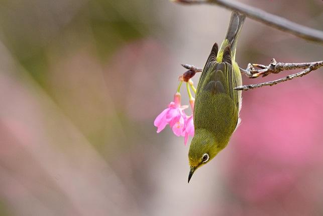 春爛漫(4)