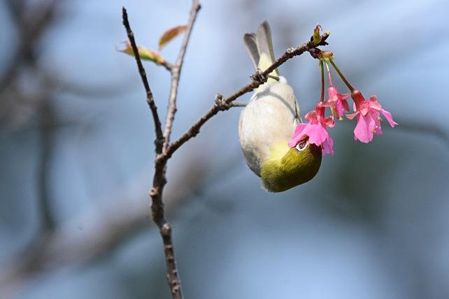 春爛漫(3)