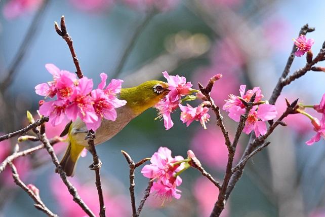 春爛漫(2)