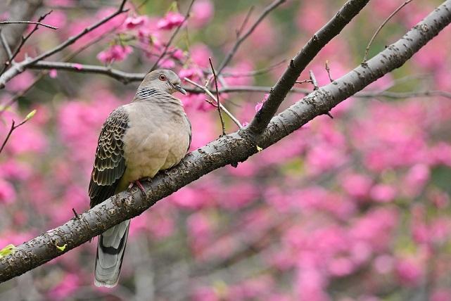 花見鳥(2)