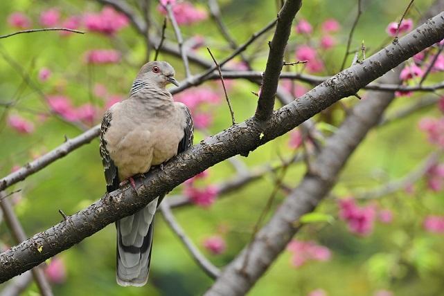 花見鳥(1)