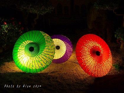 東長寺-傘