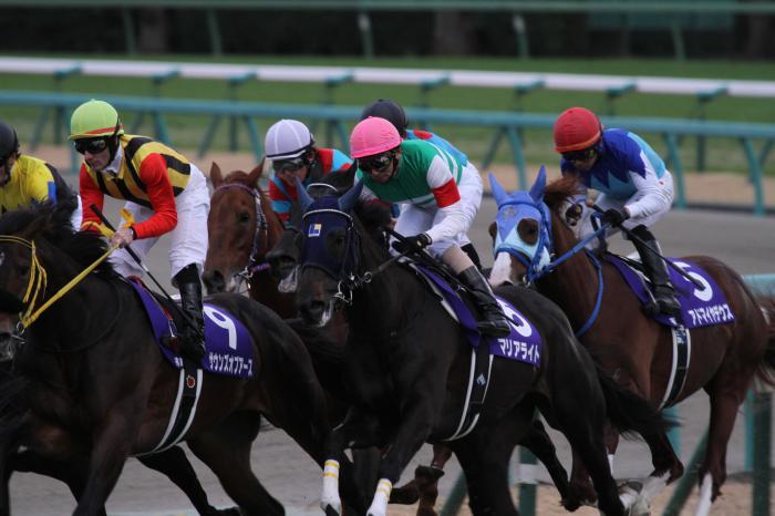 2015 マリアライト 有馬記念