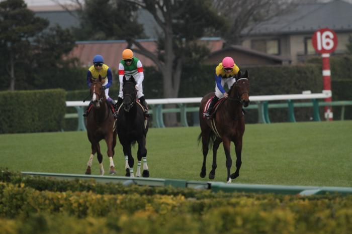 2016 マカヒキ 弥生賞4