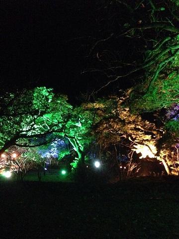 今帰仁桜祭り2 blog