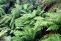 Ferns[1]