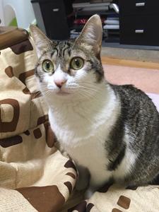 ナナちゃんエイト君5