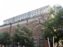 東京芸大の桜