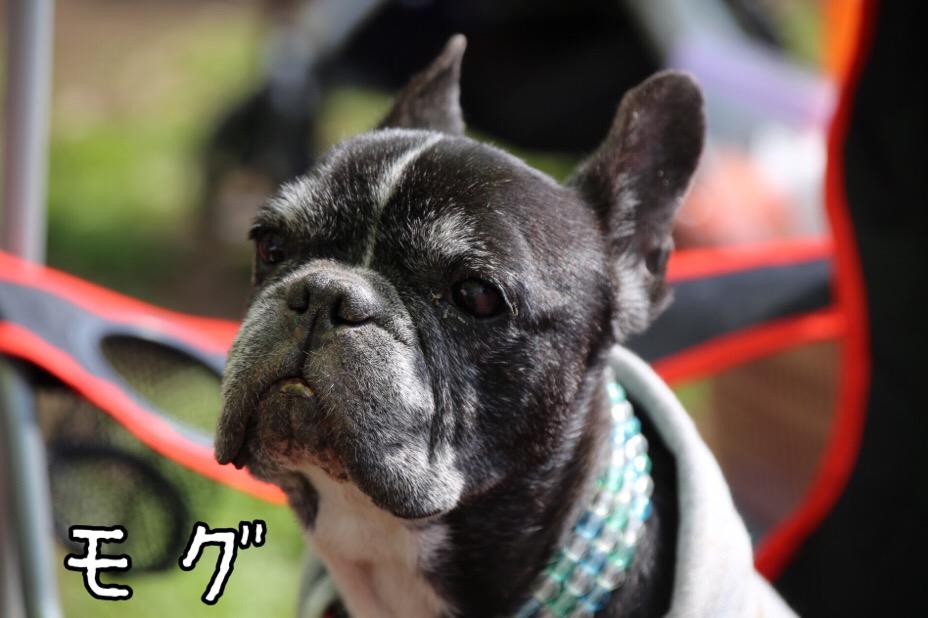 GD会 関東BBQ 7