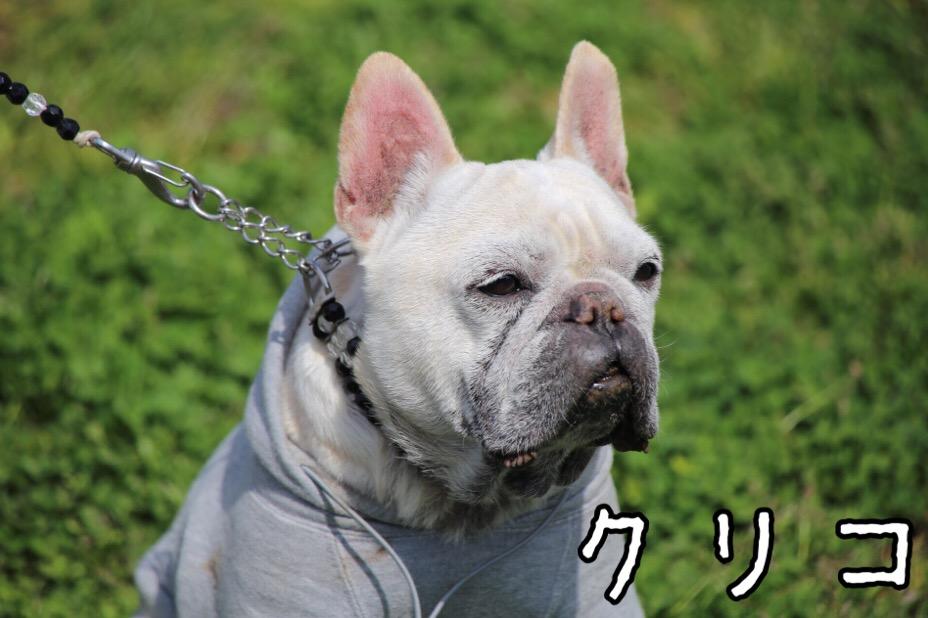 GD会 関東BBQ 8