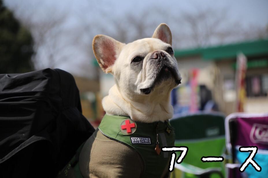 GD会 関東BBQ 12