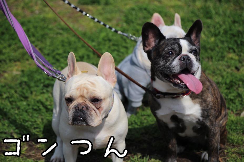 GD会 関東BBQ 14