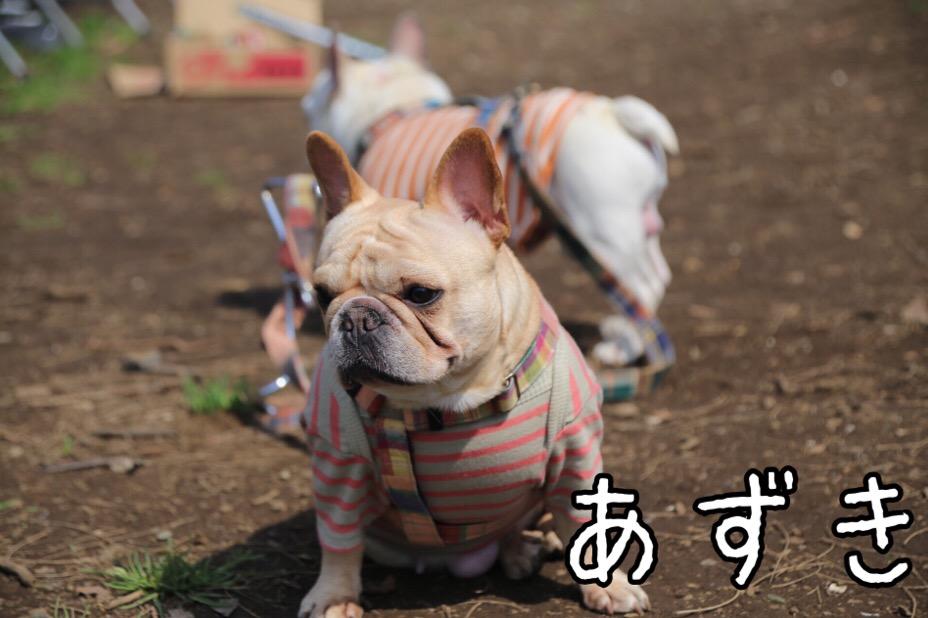 GD会 関東BBQ 18