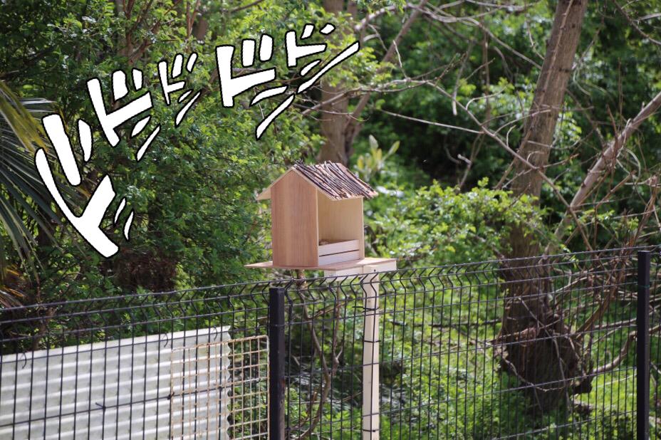 鳥の巣設置作戦 2