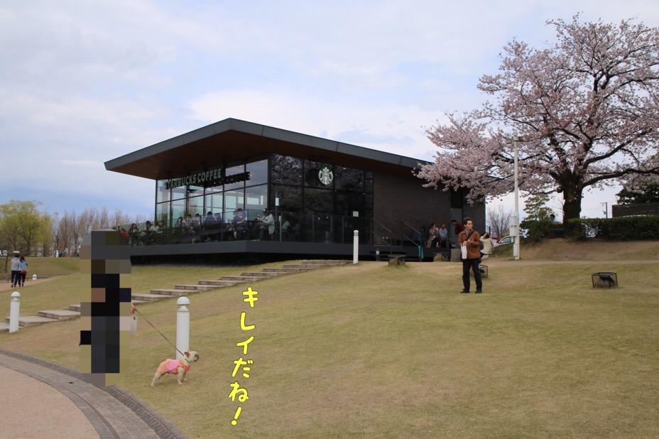 富山のスタバと古都丸 2