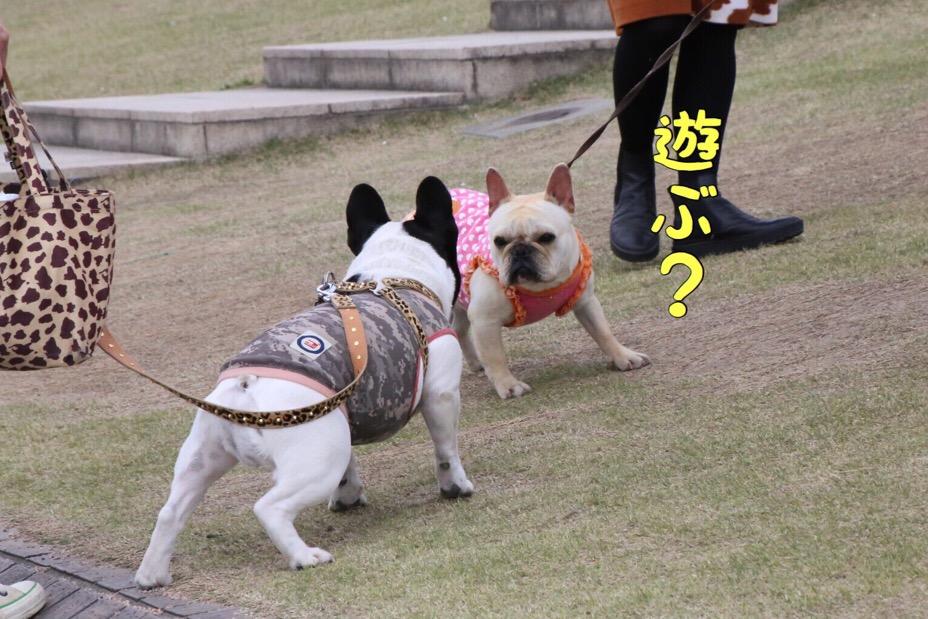 富山のスタバと古都丸 4