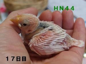 HN44幼名はこちゃん~にょいんちゃん
