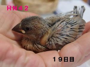 HN42幼名にこ~おっとりちゃん