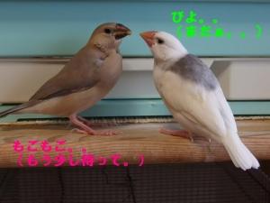 ヒナの不思議(2)