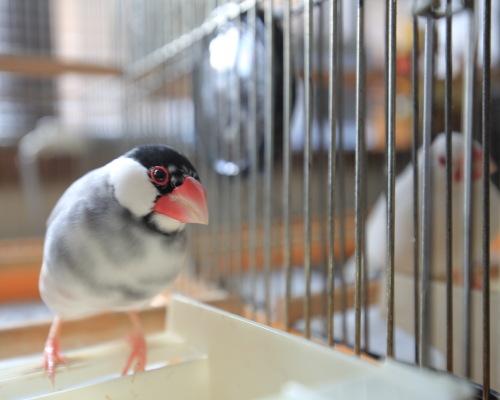 cage no nakade 0315 (2)