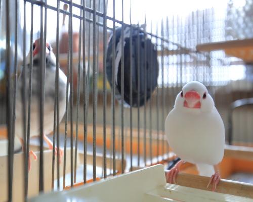 cage no nakade 0315 (4)
