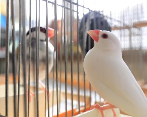 cage no nakade 0315 (3)