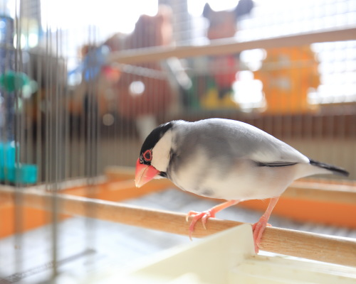 cage no nakade 0315 (1)