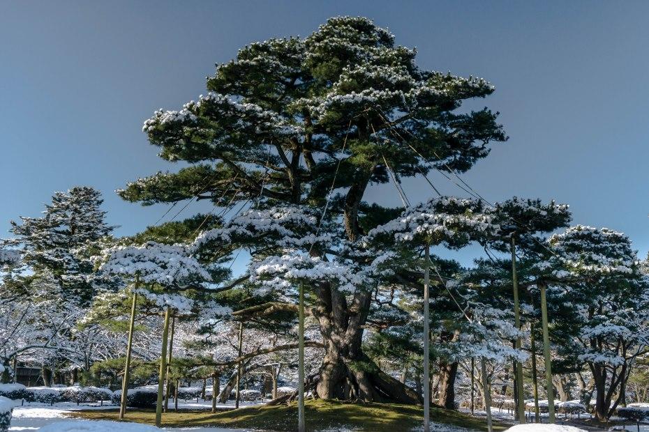 2016.02.25兼六園の雪景色14