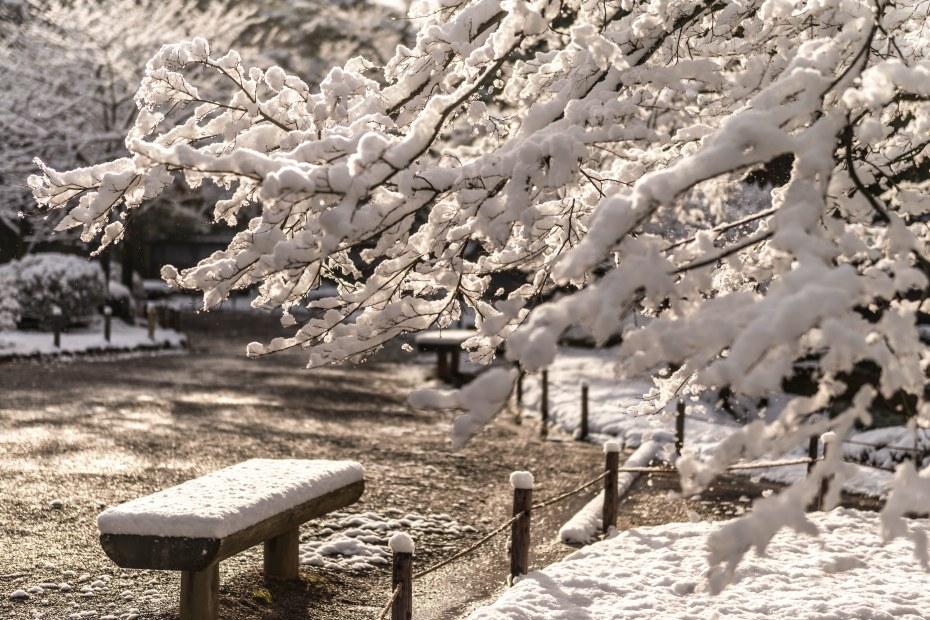 2016.02.25兼六園の雪景色11