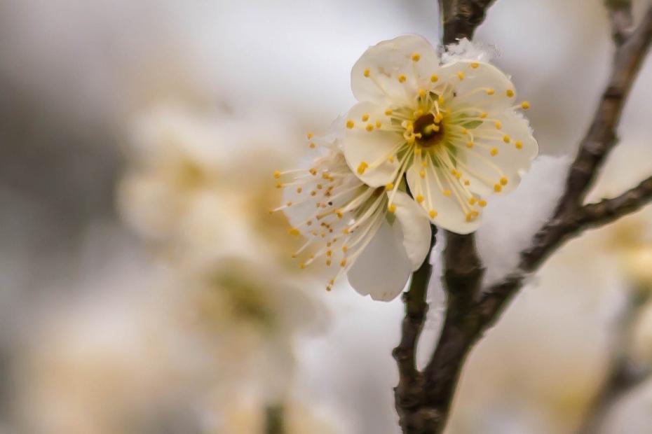 2016.02.25兼六園の雪景色10