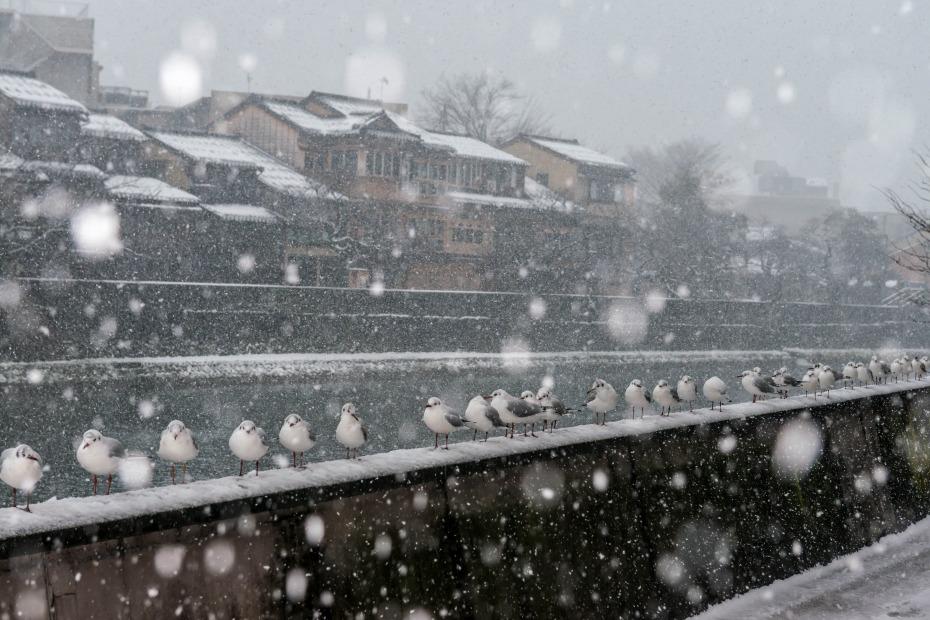 2016.02.26雪景色の主計町1