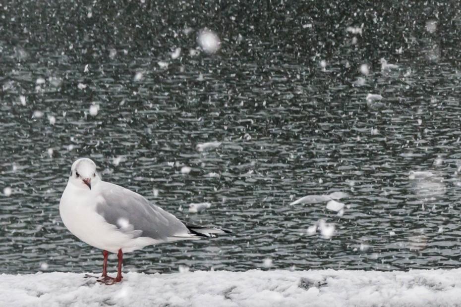 2016.02.26雪景色の主計町2